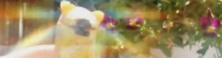 Vidéo : poupée de cire